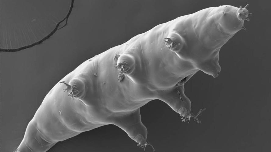 Verdens rareste dyr ble nettopp litt rarere