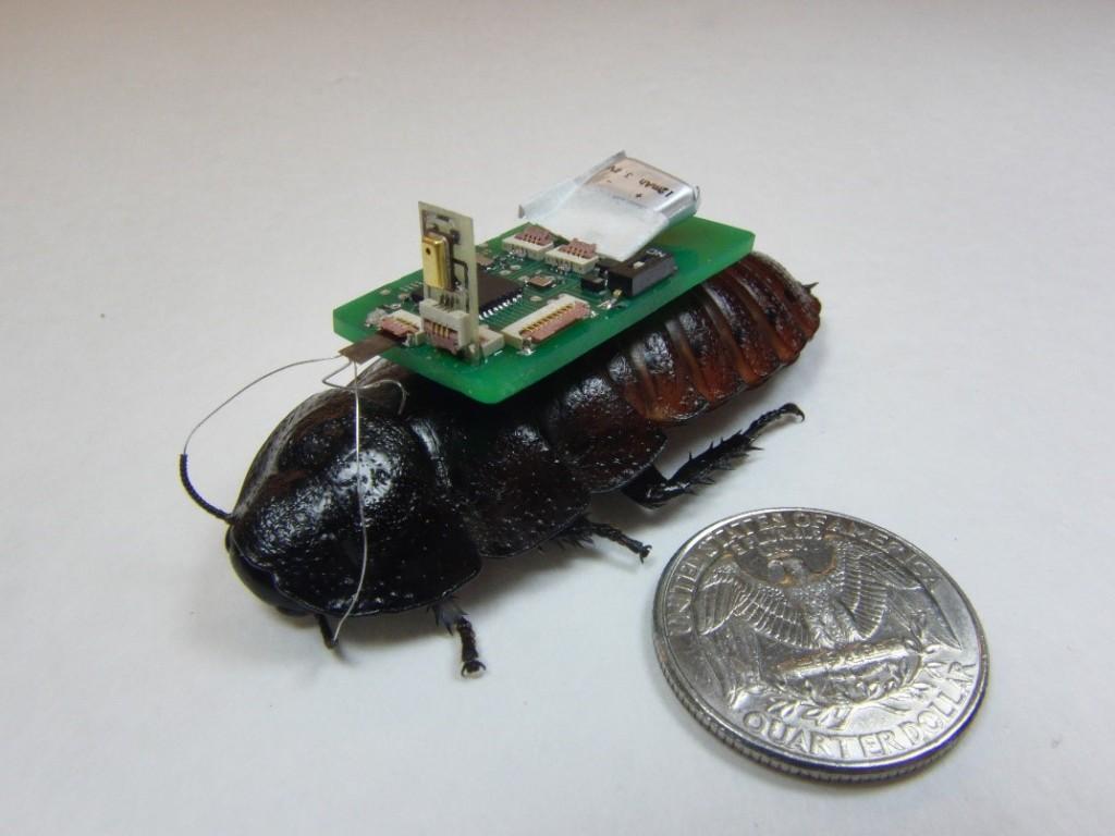 En kakerlakk med sekken på, klar til framtidige redningsoppdrag. Foto: Eric Whitmire/NCSU.