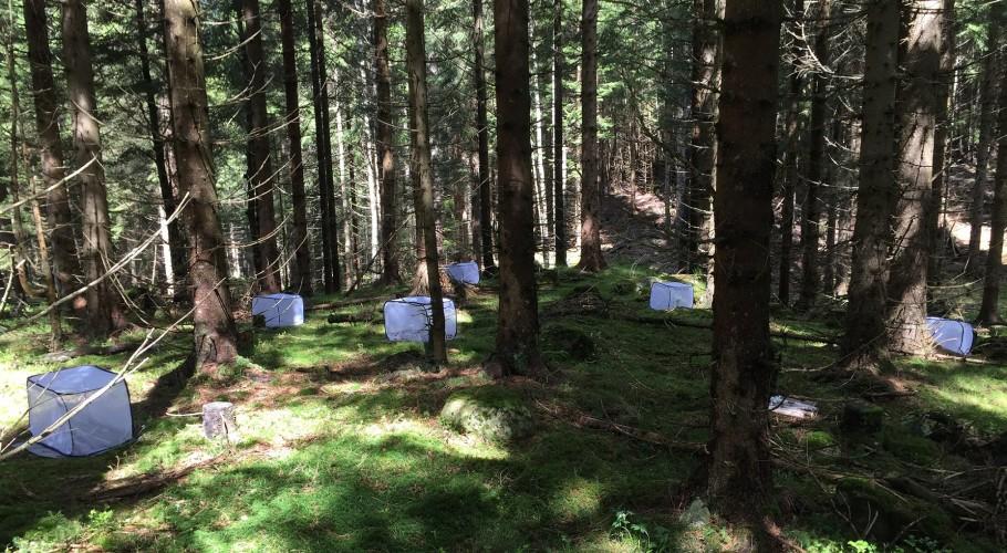 Pinner på telttur 50 steder på kloden!