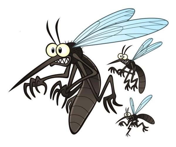 Hva er greia med myggen?
