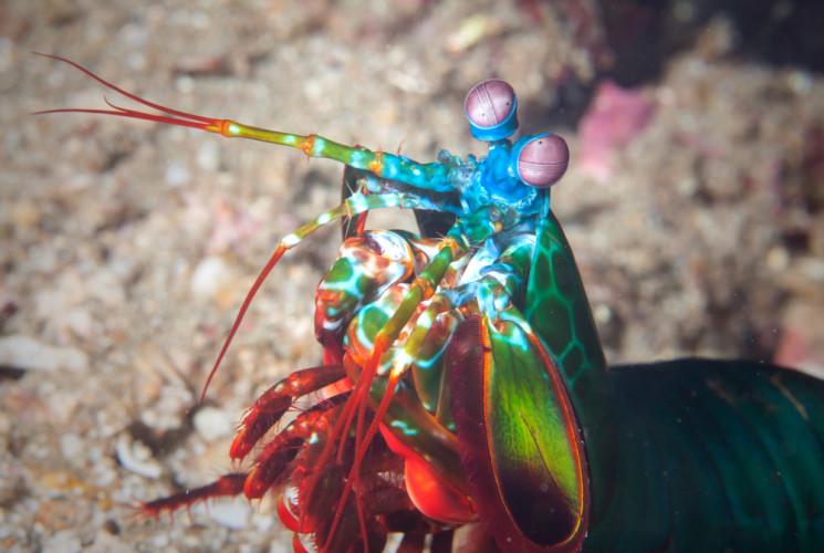 Hvorfor er det ikke insekter i havet?