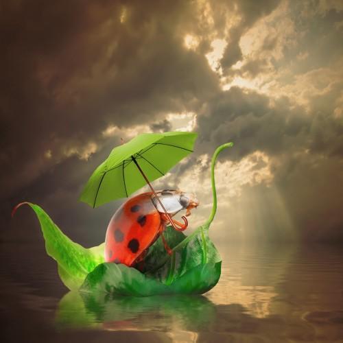 Varmere, våtere, villere – hva med billene?
