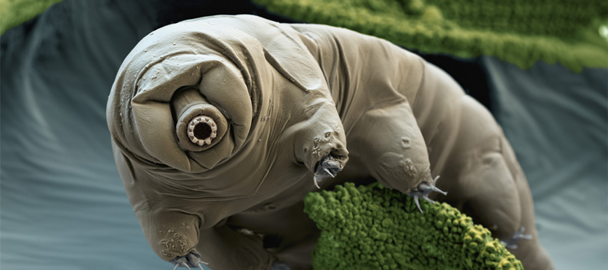 tardigrade-featured