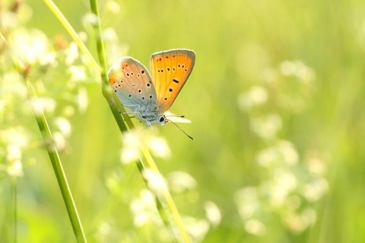Sære sommerfugler