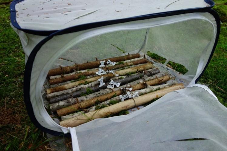 Besøksdag i pinne-teltleiren
