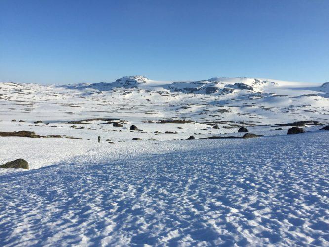 Insektjakt med ski og klister