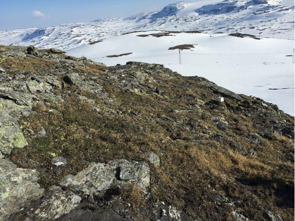 En klisterfelle (nederst til venstre) er plassert med panoramautsikt på Sandalsnuten, Finse