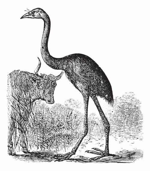 De enorme moa-fuglene døde ut på 1400-tallet