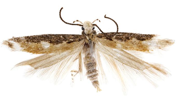 Den (relativt) berømte møllen N. donaldtrumpi
