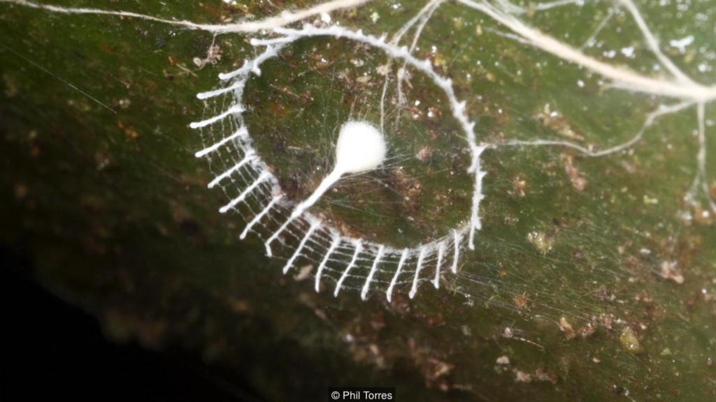 Mysteriet Silkhenge: Et mikroskopisk gjerde med et vakkert bardunert spyd i midten