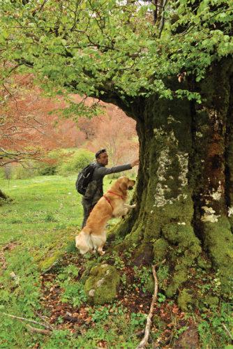 En hund etter biller