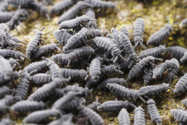 larver i norge som kommer om våren