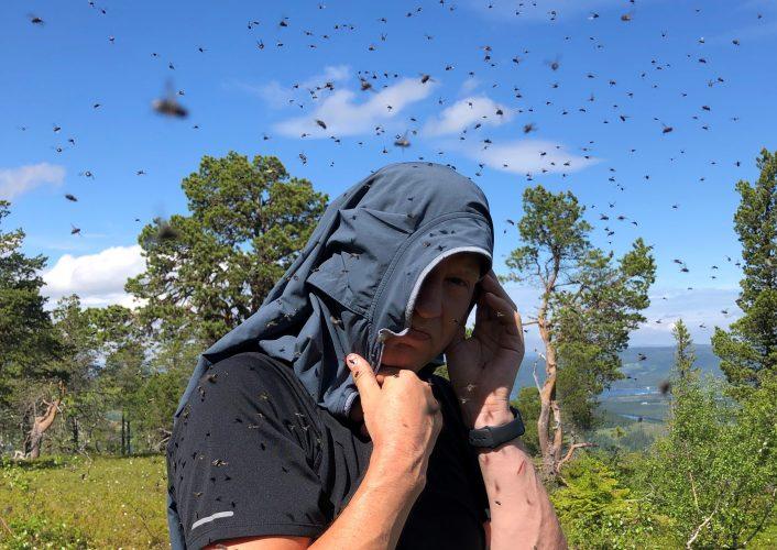 Er det mye fluer / klegg / mygg / knott i år?