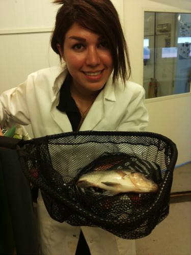 NMBU-forskning bidrar til rimeligere og mer bærekraftig oppdrettsfisk