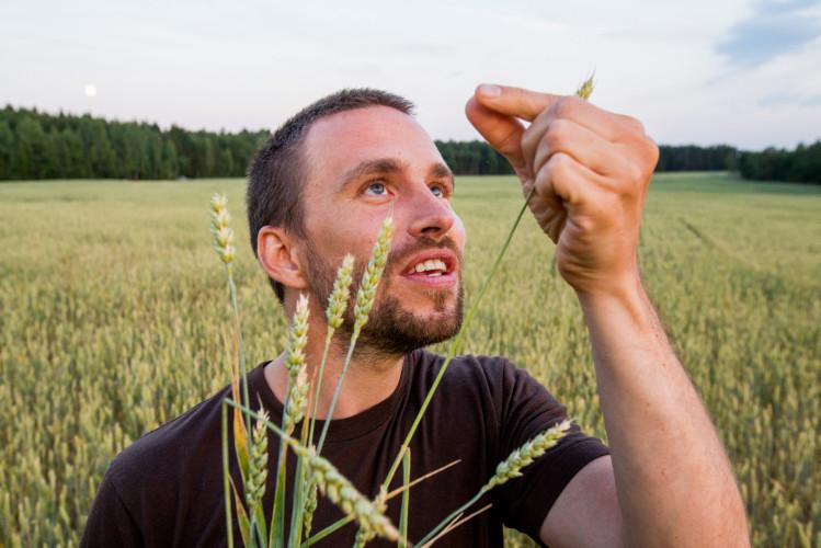 Et 17 milliarder langt steg mot mer og bedre hvete