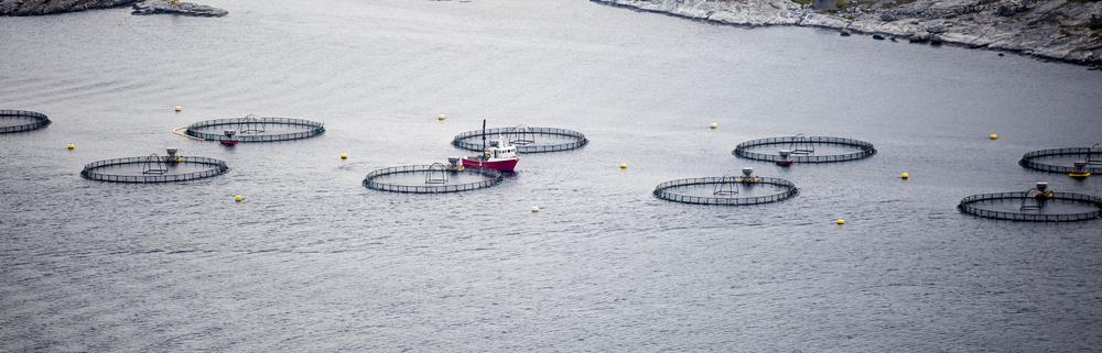 Fjordfiske og oppdrettsnæring – en arealkonflikt i saltvann